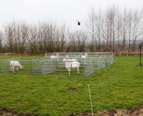 Low-flying helicopters produced brief, surprised reactions in goats